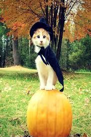 38 best halloween images on pinterest halloween ideas halloween