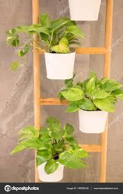 plante verte dans une chambre plante verte dans chambre minimal style photographie nalinrat