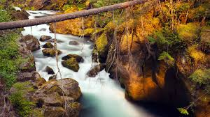 River Bed Definition Mountain River Riverbed With Rocks And Boulders Fallen Pine Tree