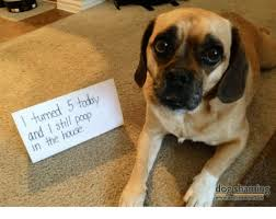 Dog Shaming Meme - today 5 turned poop i and house in the dog shaming meme on me me