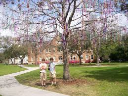 mardi gras trees post mardi gras tree at tulane picture of new orleans louisiana