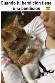 Gato Meme - gatos 3 home facebook