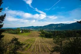 vineyards willamette valley oregon stock image image of