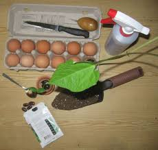 ground egg shells the benefit of egg shells and coffee grounds for your garden