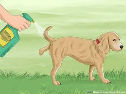 Off Backyard Spray Reviews 3 Ways To Keep Dogs Off Lawn Wikihow