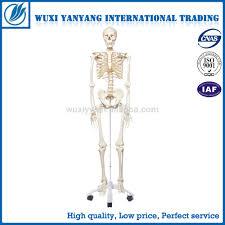 Cheap Skeletons For Halloween Cheap Plastic Skeletons Cheap Plastic Skeletons Suppliers And