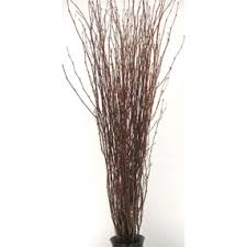 Decorative Branches Birch Branches Natural Birch Branches by