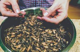 fish and chirps some see bugs as the next big thing in food the