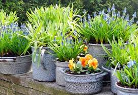 how to plant in pots planet natural