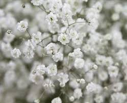 Baby S Breath Wholesale 495 Best Images On Pinterest Flowers Spring And Beautiful