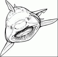 incredible white shark coloring pages shark coloring