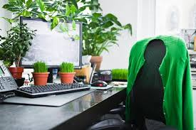 Desk Plant Office Plants Boost Productivity By 15 Study Finds Time Com