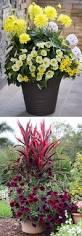 indoor flowering plants garden ideas outdoor planter ideas ceramic plant pots container