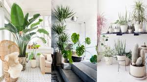 Best Inside Plants 25 Best Indoor Plants Ideas Simple Ways To Decorate With