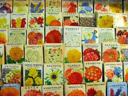 cheap seed packets dime store chic september 2007
