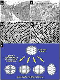 marine drugs free full text evolving marine biomimetics for