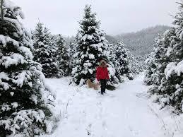 papa noel trees home