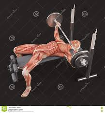 bodybuilding gym exercising wide grip barbell bench press chest