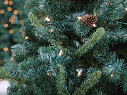 Christmas Tree Pick Up Here U0027s How To Get Christmas Tree Permits For Kaibab And Tonto