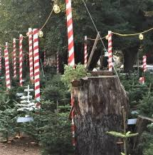 buy christmas tree where to buy a x tree in san francisco and around lostinsf