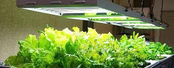 250 watt hps grow light hps plant lights grow basics for the first timer grow lights for