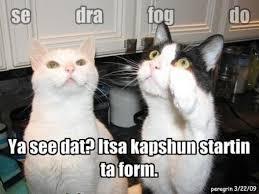 Grumpy Cat Meme Creator - funny cat captions funny cat captions cat captions and captions