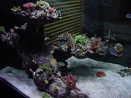 Floating Aquascape Reef2reef Saltwater And Reef Aquarium Forum - 46 best reef images on pinterest mushrooms coral reefs and