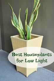 Indoor House Plants Low Light Best Houseplants For Low Light Mom Foodie
