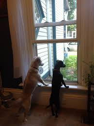 Window Seats For Dogs - june 2015 hit coffee