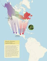 Waterfowl Migration Map Vygogo Waterfowl Migration Map