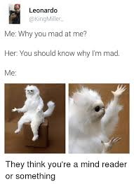 Persian Cat Meme - leonardo miller me why you mad at me her you should know why i m