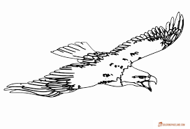 birds coloring pages easy downloadable printable free