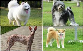 world u0027s best selling dog breeds 2017 2018 top 10 list