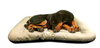 bedroom delightful indestructible dog bed petco home design