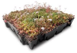 Casette Greenhouse by Green Tech Launches New Gtsedum Green Roof Cassettes Local