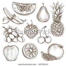 fruit drawing stock images royalty free images u0026 vectors