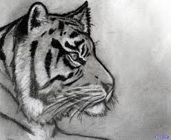 how to sketch a tiger step by step sketch drawing technique