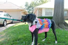 a lot of halloween costumes quick and easy dog halloween costume