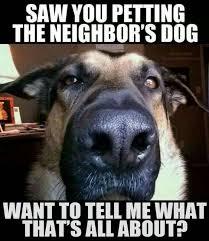 Meme Dogs - laugh alert 2016 s top dog memes that were total favs
