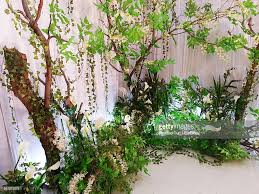 decorative plants in house stock photo getty images
