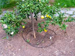 fruit tree garden layout drip system for garden drip irrigation system buying guide diy