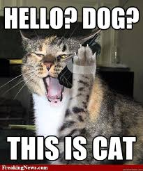 Dog Phone Meme - hello dog this is cat cat phone quickmeme