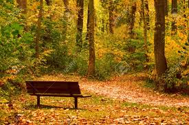 a park bench on a trail invites you to take a moment to enjoy