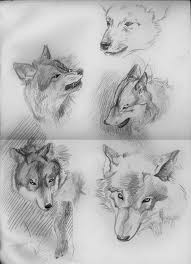 wolf sketches no1 by makowh on deviantart