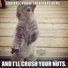 Squirrel Nuts Meme - squirrel bird feeder meme bird best of the funny meme