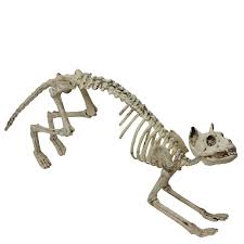 Skeleton Dog Decoration 10 Halloween Decor Trends Taking Over Homes This 2017 The One