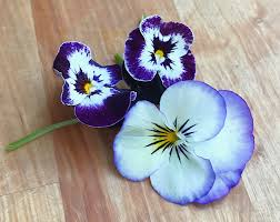 edible blue flowers tips tricks edible flowers new food tuesdayz
