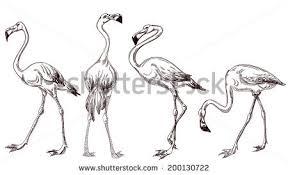 flamingo sketch download free vector art stock graphics u0026 images