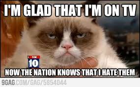 Mad Cat Memes - cat meme no
