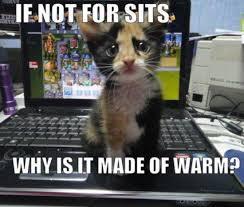 Cute Cats Memes - if not for sits cat meme cat planet cat planet